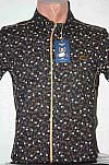 Shirt, Price, short sleeve, fitted, with print, with trim, metal buttons